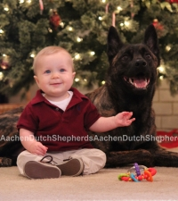 Baby sitting next to Dutch Shepherd